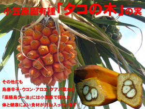 画像4: 薬膳島ラー油
